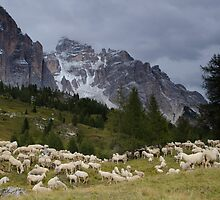 Sheep below Rif Cinque Torre, Dolomites, Italy by David Galson