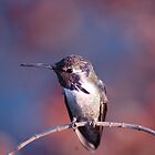 Hummingbirds Around The World by Meeli Sonn
