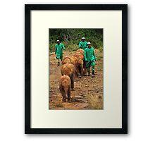 Baby Elephant Walk Framed Print