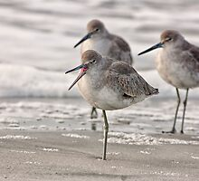 Shore Bird Yoga, Ocean Isle Beach, NC by Denise Worden