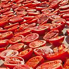 Fresh Tomatoes Under Hot Sun To Dry by Kuzeytac