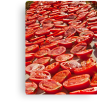 Fresh Tomatoes Under Hot Sun To Dry Canvas Print