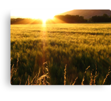 Sea of Grain Canvas Print