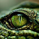 Eye of the Crocodile [Print &amp; iPad Case] by Damienne Bingham