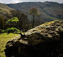 Larch clinging on in Glen Lochay by Richard Ion