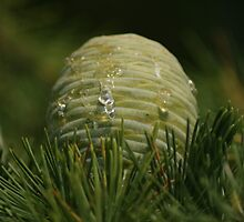Tears of a pine cone by Cliffyj