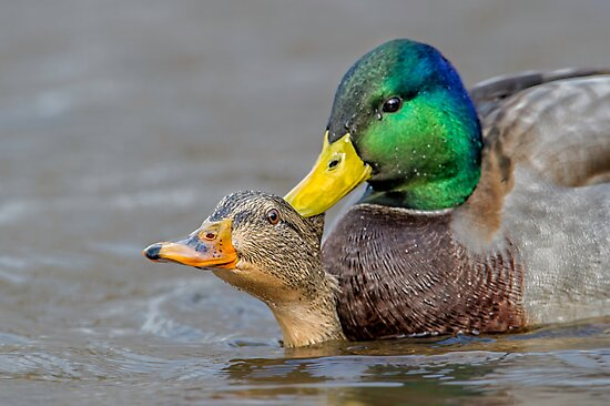 What's Up Duck! by Daniel  Parent