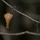 Hanging On by latitude54photo