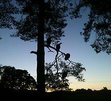 Turkeys in the tree by Erdbeeryoghurt