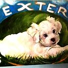 DEXTER LIVES HERE by Barbara Sparhawk