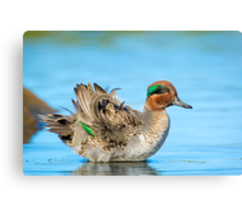 Fluffing Teal Canvas Print