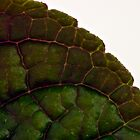 Leaf Details - Macro  by Sandra Foster