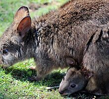mums n bubs everywhere ... pademelon by gaylene