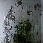 Mouldy Wall by SHappe