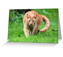 Dickens a little Tiger - So Full of Life Greeting Card