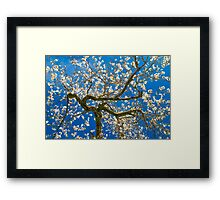 Almond Blossum inspired by Vincent van Gogh Framed Print