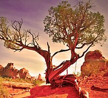 A Tree in the Desert by Tara  Turner