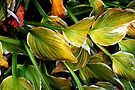 Fall Hosta by Eileen McVey