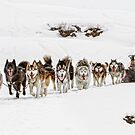 Dog Sledding by Patricia Jacobs CPAGB LRPS BPE2