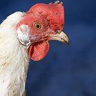 Chicken by Walter Quirtmair