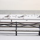 Bench in snowy Coney Island by liptonmania