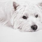 We love Westies by Love Through The Lens