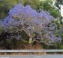 On The Roadside - Urban Jacaranda by Fiona Allan Photography