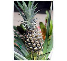 Bromeliad/Pineapple Poster