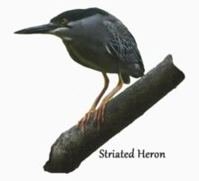 Striated Heron Kids Clothes