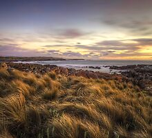 Button Grass and Sea - Tarkine Coast - Tasmania by highlux