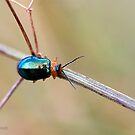 Metal insect by Neutro