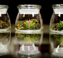 MARIJUANA jar by chasemarsh