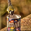 Only Smarties Have The Answer - Great Tit by brianfuller75