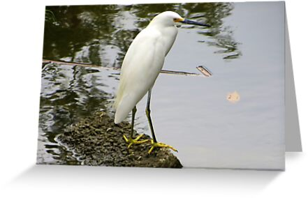 Snowy Egret by AuntDot