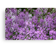 Fragrant Sea Of Purple Canvas Print