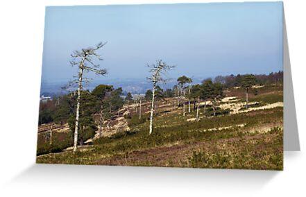 Ashdown Forest by Sue Robinson