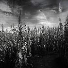 Lost in the Corn part 2 by Linda Makiej