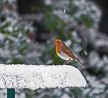 Robin on Snowy Feeder by Sue Robinson