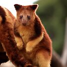 Baby Tree Kangaroo by Daniela Pintimalli