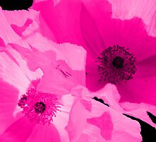 Pink Poppies iPad Case by Betty Northcutt