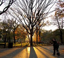 Central Park, New York City  by Alberto  DeJesus