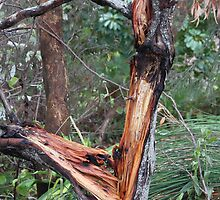 Aussie Bush Sticks: Wild Storm Last Night by aussiebushstick