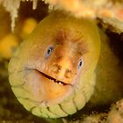Green Moray Eel - Gymnothorax prasinus by Andrew Trevor-Jones