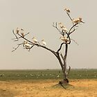 Pelican Tree by Donald  Mavor