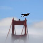 Eagle over Golden Gate Bridge by Michiel Meyboom