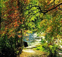 Autumn Riverside by Kimlouise