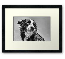 Dog in black & white Framed Print