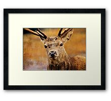 Deer On Canvas Framed Print