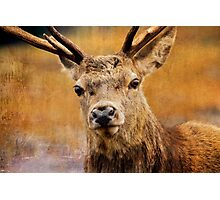 Deer On Canvas Photographic Print