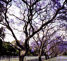 ~ purple rain ~ by Maria  Moro